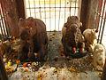 Pura Mahadev Meerut23.JPG