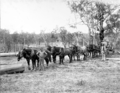 Queensland State Archives 2639 Logs for the sawmill Stanthorpe October 1918.png