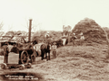 Queensland State Archives 5185 Threshing Wallumbilla 1899.png