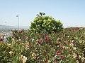Realejo-San Matias, Granada, Spain - panoramio - georama (6).jpg