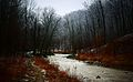 Red Hill Creek Near Albion Falls.JPG