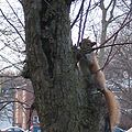 Red squirrel 400px.jpg