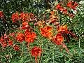 Redflowers2.jpg