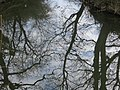 Reflections - March 2013 - panoramio.jpg
