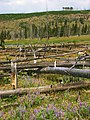 Rejuvenation 2005 - panoramio.jpg