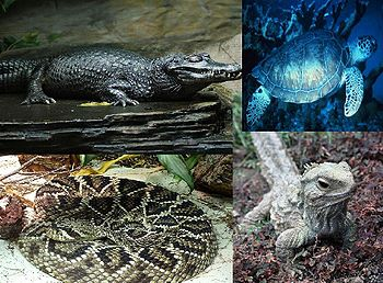 English: Reptilia (reptiles), based on: File:B...