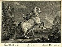Ridinger-Spanish-Genett.jpg