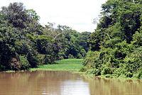 Rio Tefe.jpg