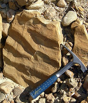 Sedimentary structures - Ripple marks in a siltstone (Carmel Formation, Middle Jurassic, near Gunlock, Utah).