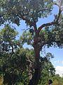 Riserva naturale orientata Bosco di Santo Pietro 07.jpg