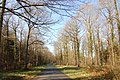 Road through Dymock Wood near Shaw Common in early April - geograph.org.uk - 755434.jpg