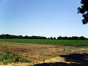 Geography of Arkansas - Flat land in cultivation, such as this in Desha County, is typical of Southeast Arkansas