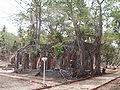 Ross Island Andaman 4140021.JPG