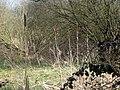 Row of Rushes, Stanley Marsh Nature Reserve - geograph.org.uk - 1233014.jpg