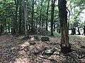 Rubkow Großsteingrab Kuhbergholz (4).jpg