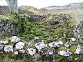 Ruin at Balnaknock - geograph.org.uk - 1106809.jpg