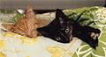 SLEEPINGKITTENS1993photobyNancyWong.jpg