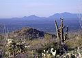 Saguaro National Park Saguaro Landscape 9878.jpg