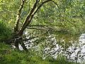 Saint-Jean-aux-Bois (60), étang de Sainte-Perrine 4.jpg