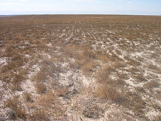 Rangeland - Weeds are all that is left in Idaho after overgrazing, wildfires and subsequent invasion by non-native species. Russian thistle Salsola kali is the only plant seen in this picture.