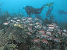 Mergulho Aquático