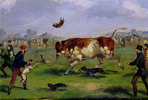 Bull-baiting - Bull-baiting in the 19th century, painted by Samuel Henry Alken.