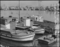 San Pedro, California. Some of the fishing boats formerly operated by residents of Japanese descent . . . - NARA - 536829.tif