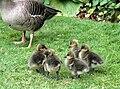 Sandringham birds.jpg