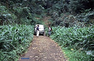 São Tomé Island - Rainforest trekking is one of the island's attractions
