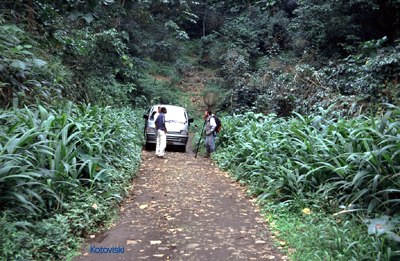 Sao tome forest