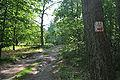 Sasino - Cycle path.jpg