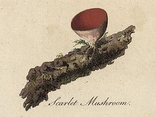 Scarlet Mushroom