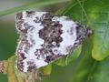 Schmetterling3x.tif