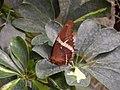 Schmetterlingsgarten Ludwigslust - geo.hlipp.de - 5594.jpg