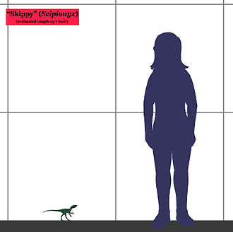 Scipionyx - Size of the juvenile specimen compared with a human