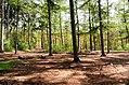 Scoutcentrum Buitenzorg Baarn - panoramio (11).jpg