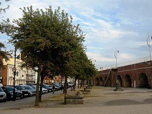 Hippophae rhamnoides - Sea Buckthorn as a street tree behind Hotwalls, Old Portsmouth, UK