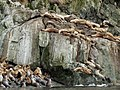 Sea Lions Haulout 2008 WC16.jpg