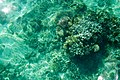 Sea coral, clear turquoise water, tropical bliss, Bacuit Bay, El Nido, Palawan, Philippines.jpg
