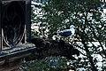 Sea gull making good use of a gargoyle on the Scott Monument (5898466997).jpg