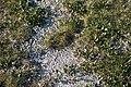 Selevenjske pustare - cvetanje soli.jpg