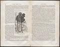 Semnopithecus maurus - 1700-1880 - Print - Iconographia Zoologica - Special Collections University of Amsterdam - UBA01 IZ19900027.tif