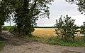 Shedbury Lane - geograph.org.uk - 223296.jpg