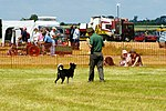 Sheep Dog Display (2620994185).jpg