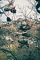 Shoe Tree at University of Minnesota Twin Cities Campus, West Bank (18222498566).jpg