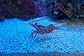Shrimp - Flickr - p a h.jpg