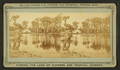 Silver Springs on the Oklawaha River, from Robert N. Dennis collection of stereoscopic views 3.png