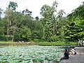 Singapore Botanic Gardens, Symphony Lake 7, Sep 06.JPG