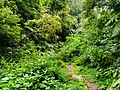 Small ways on forest.jpg