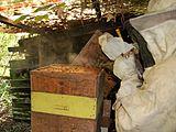 العسل 160px-Smoker.jpg